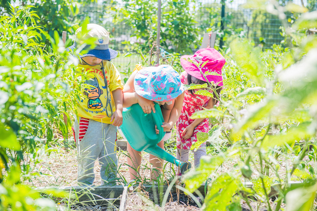 young children watering a vegetable garden in the sunshine